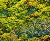 Comment créer un mur végétal ?